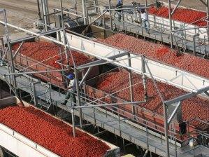 heinz tomatoes-leamington